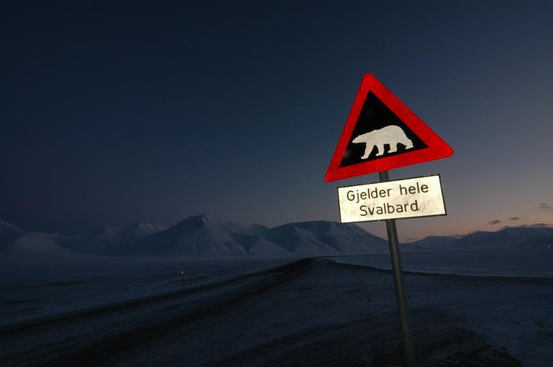 ijsberenbord